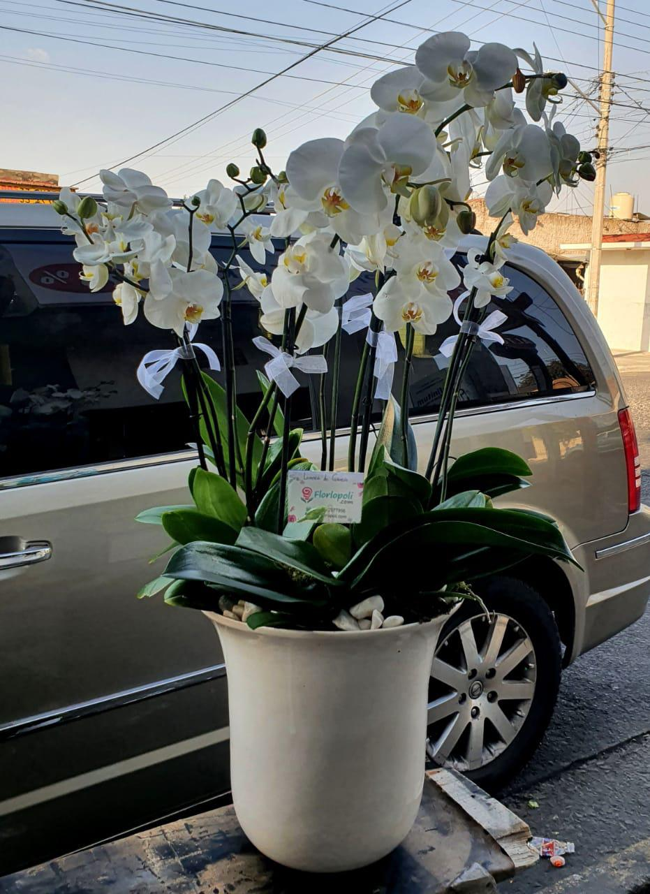 Maceta de Orquideas Blancas